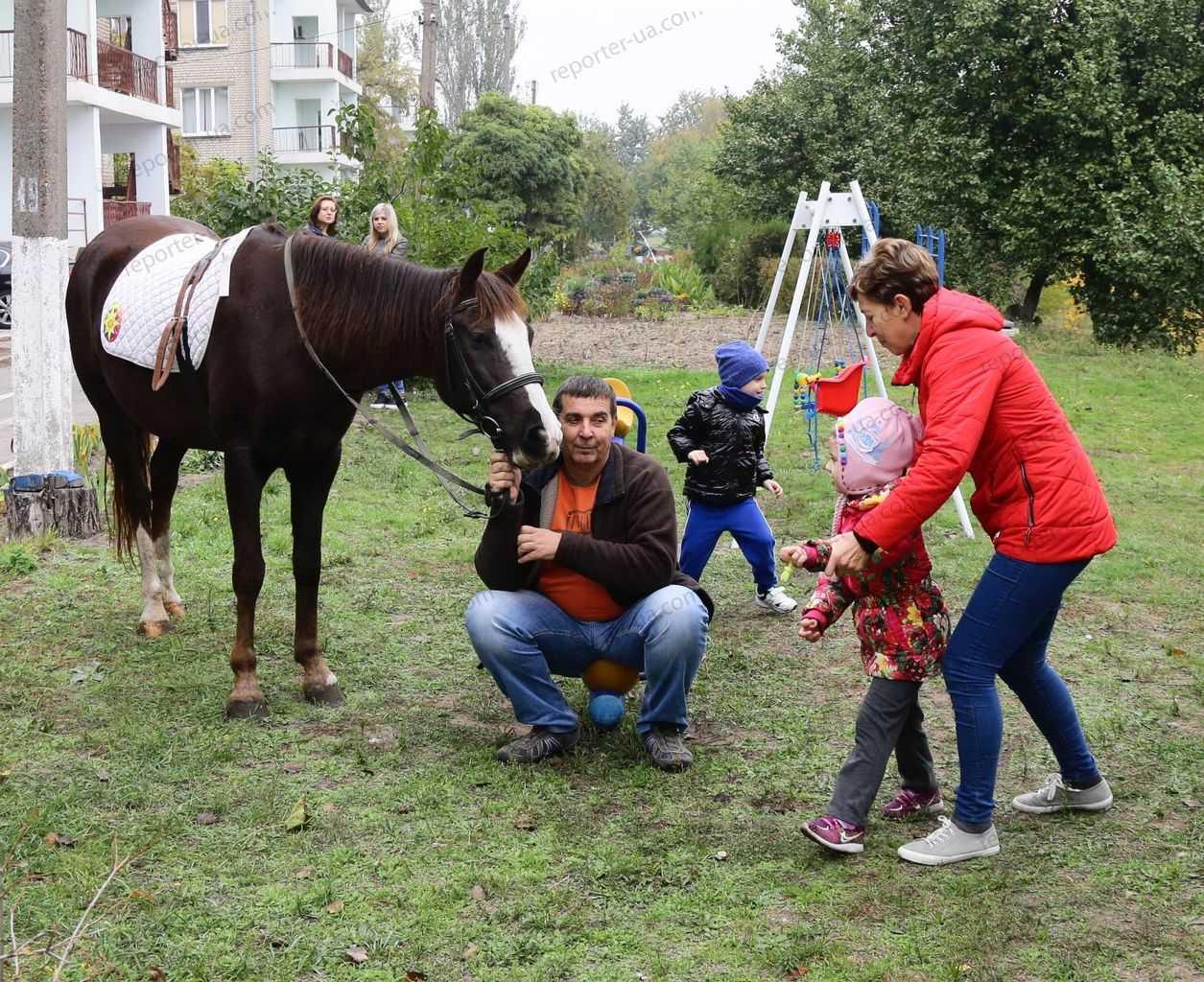 Доктор лошадь. как иппотерапия помогает вреабилитации неизлечимых больных