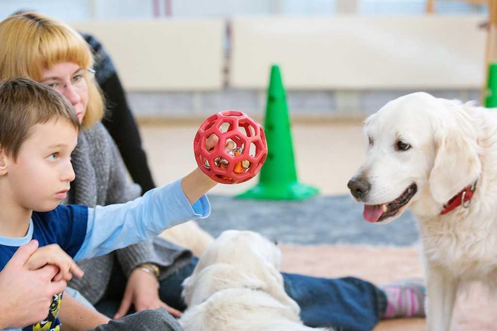 Канистерапия для детей – лечение собаками | dogkind.ru