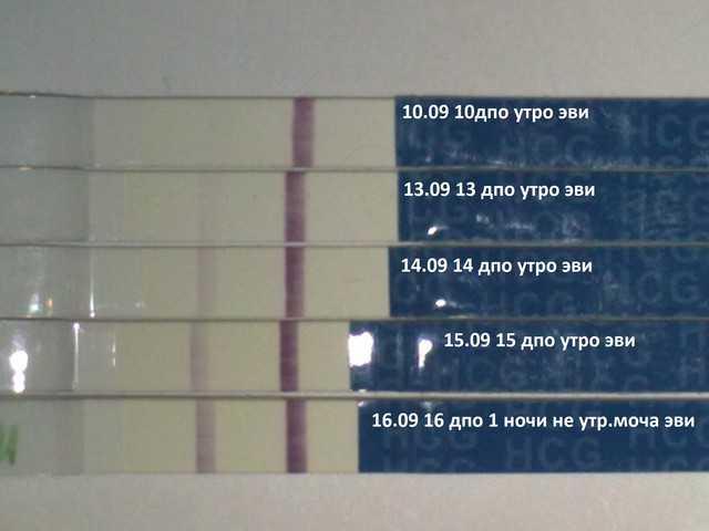 Тест на беременность «ева»: инструкция по применению и отзывы