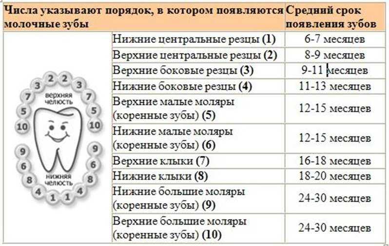 Количество молочных зубов у ребенка — зубы