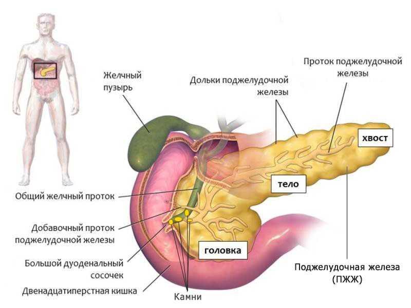 Психосоматика лиз бурбо: таблица заболеваний, психологические причины болезней поджелудочной железы, болезней шеи, насморка и высокого давления
