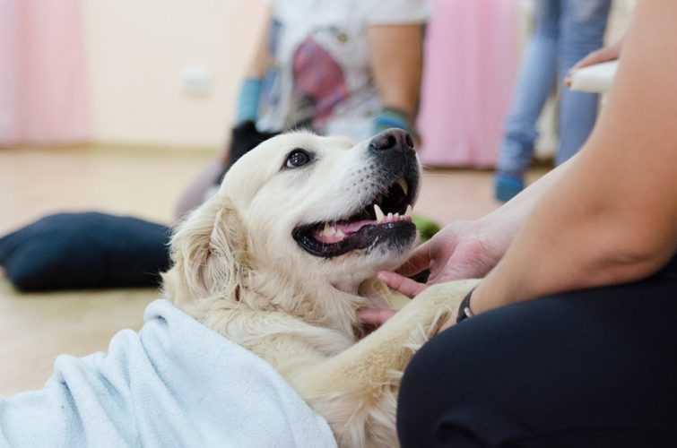 Что такое анималотерапия и в чем ее польза для детей? анималотерапия - лечение животными