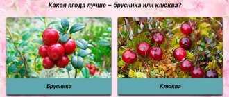 Эко в естественном цикле – эффективность щадящего метода искусственного оплодотворения