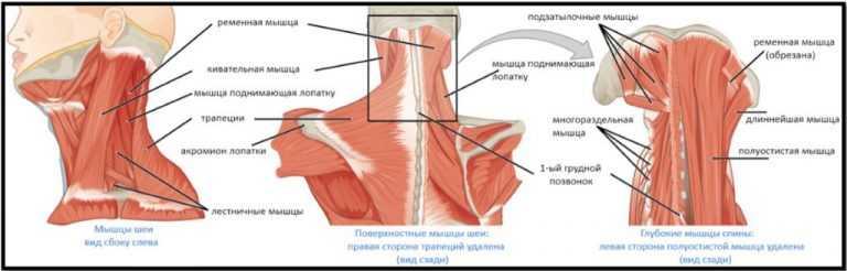 Психосоматика плечей и шеи, причина боли в них, как излечить боль в плечах и шее