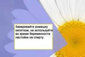 Иван-чай при беременности: можно пить напитки из растения на ранних и поздних сроках или нет?