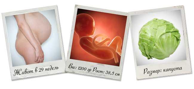 Особенности 29 недели беременности