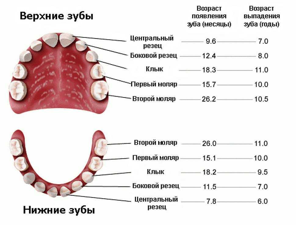 Молочные зубы у детей: схема выпадения и замены на коренные