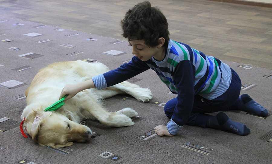 Как выбрать собаку для ребёнка с аутизмом