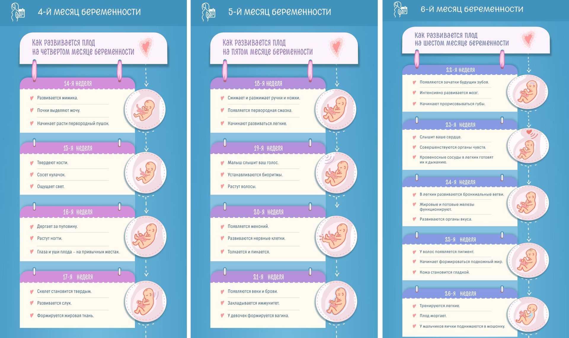 8 месяц беременности: развитие плода, ощущения беременной, узи