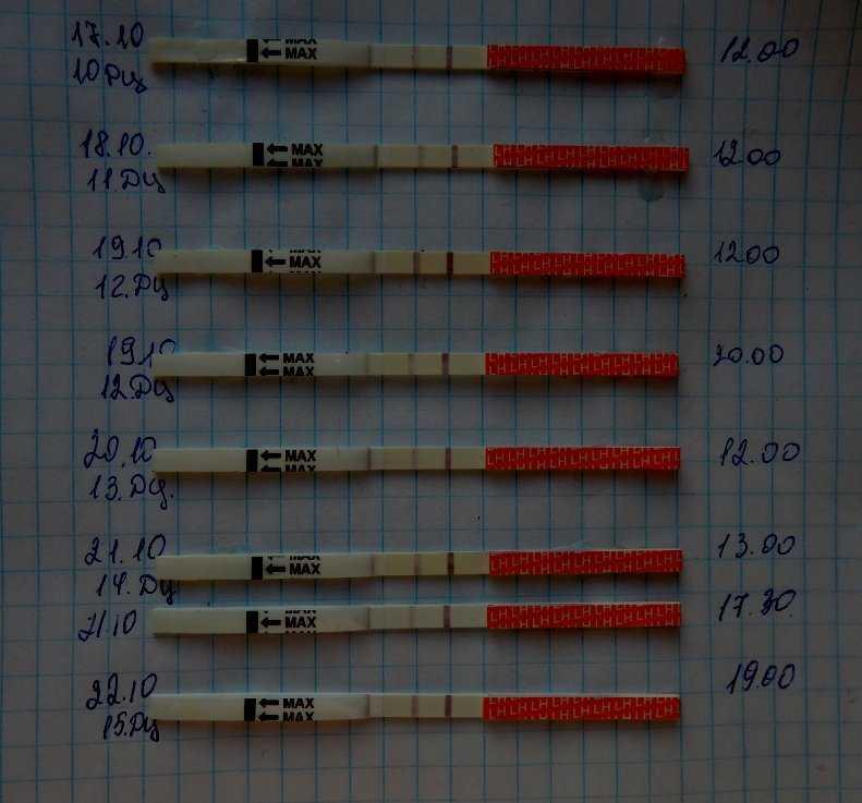 После процедуры эко на какой день показывает тест?