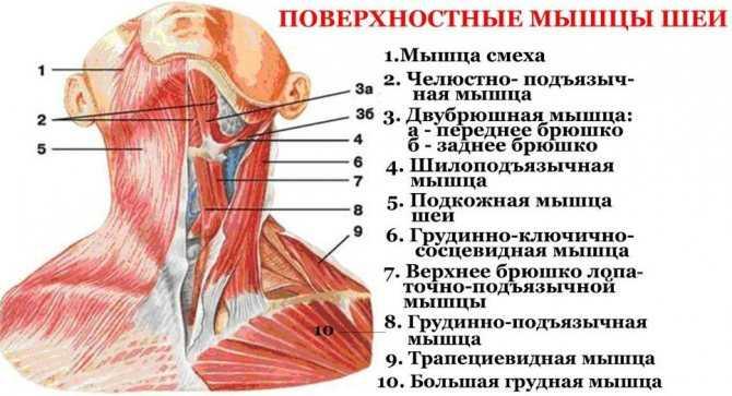 Упражнение лягушка для грудничков как правильно делать. гимнастика для новорожденных: полезные упражнения