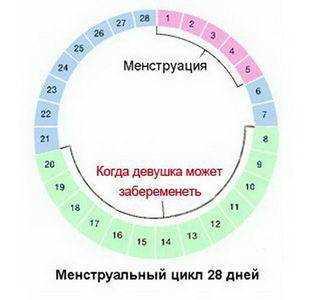 Норма или отклонение: сколько длится овуляция у женщин при 28-дневном цикле и каковы особенности процесса?