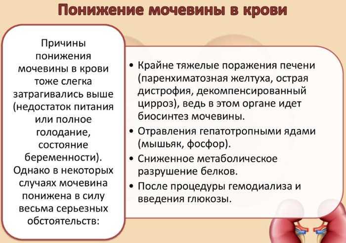Причины пониженной мочевины в крови при беременности
