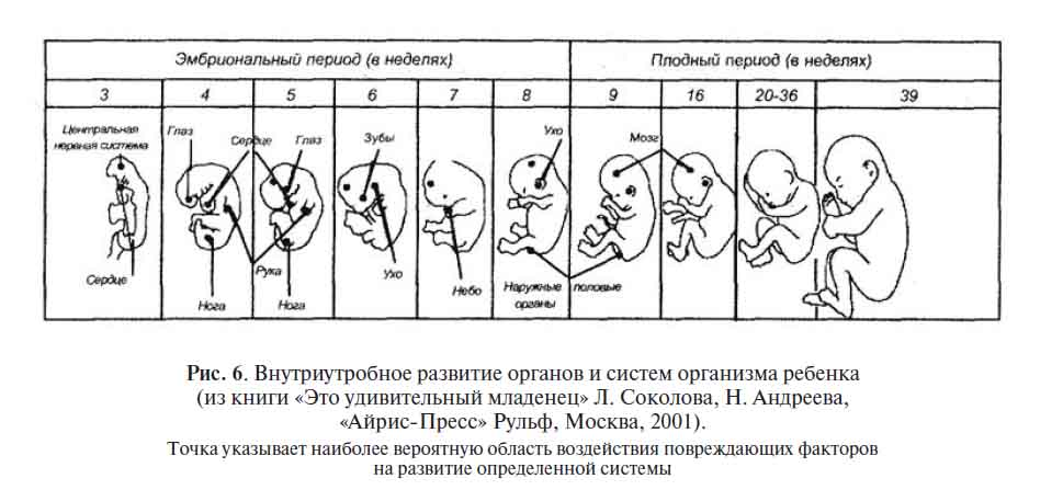 Развитие плода на 9 неделе беременности (30 фото): что происходит с малышом, размер ребенка, как выглядит плод и живот на 9 акушерской неделе