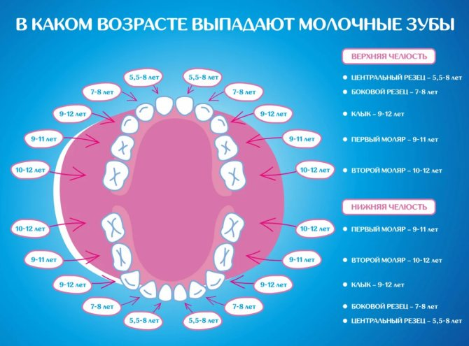 Сколько у детей должно быть в норме молочных зубов