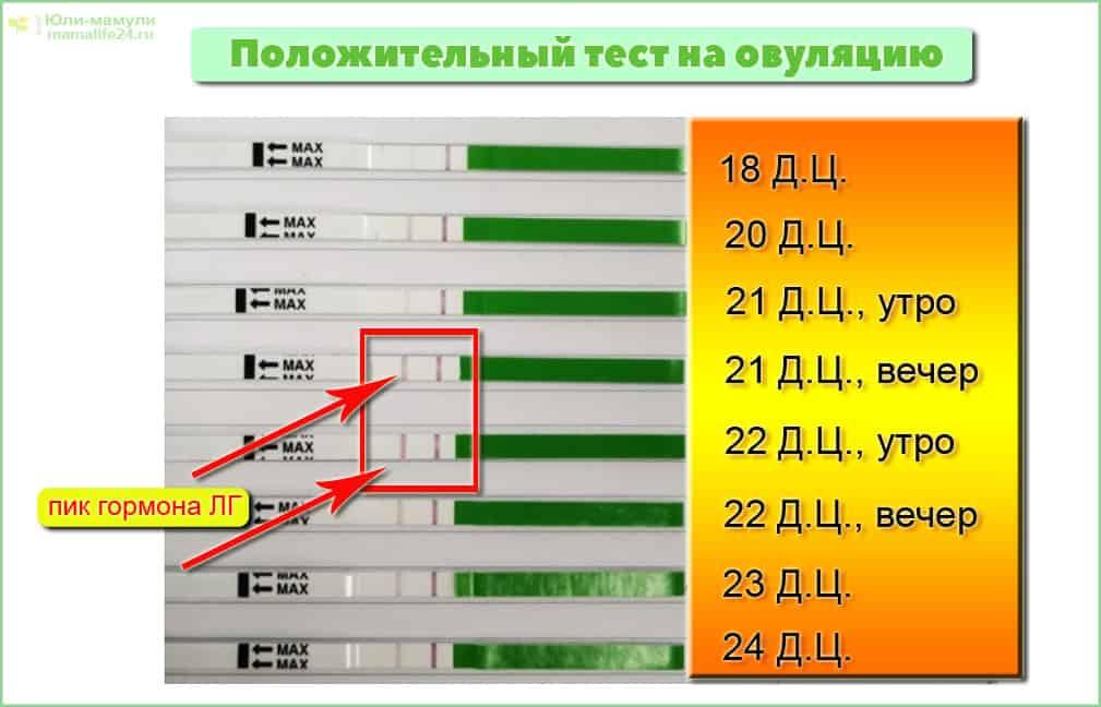 Что такое тест на овуляцию: виды, особенности, как использовать - ovulyacia.ru