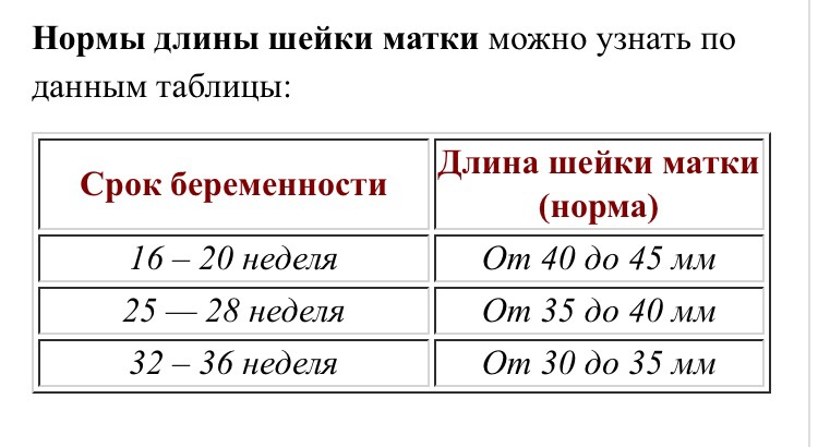 Длина шейки матки при беременности по неделям: таблица норм
