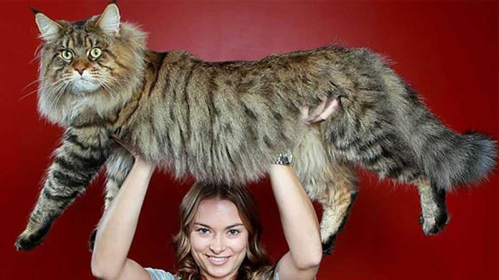 Фелинотерапия (терапия кошками): польза от общения с животными