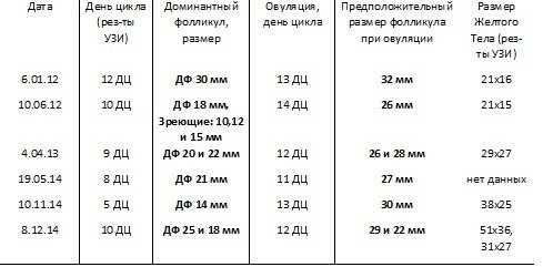 Фолликулы в яичниках - количество и размеры в норме, причины и лечение атрезии для зачатия