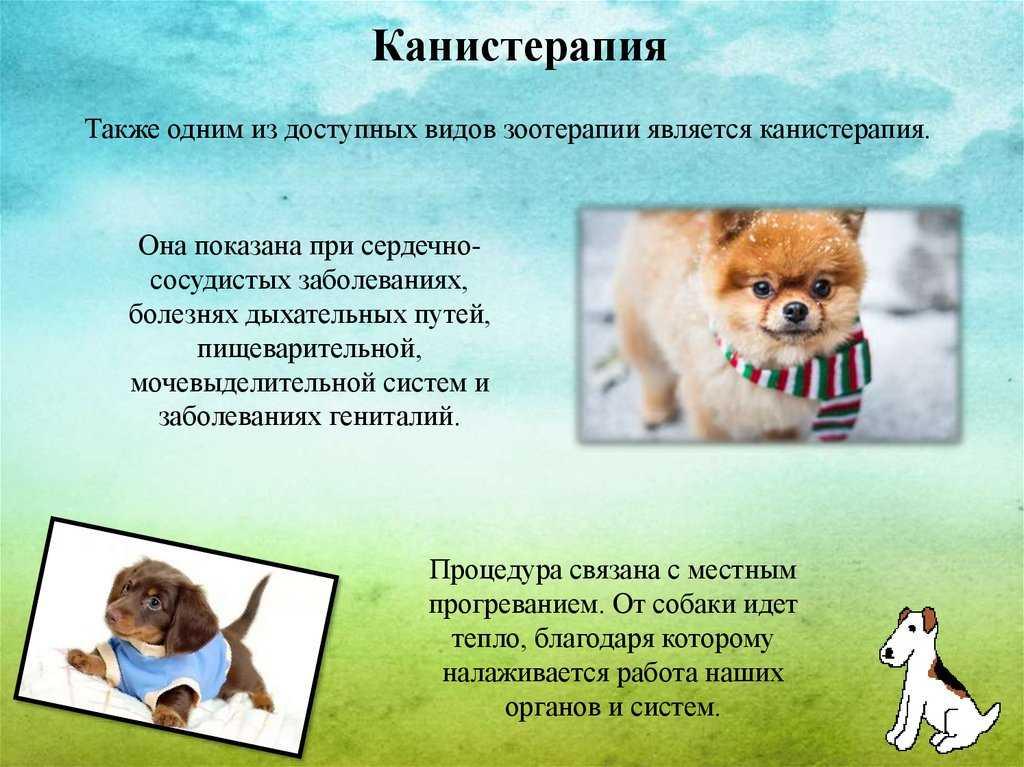Пет-терапия или влияние животных на человека