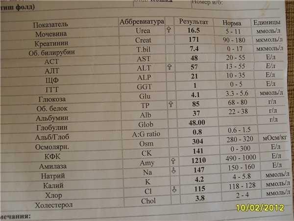 Биохимический анализ крови при беременности: нормы и расшифровка биохимии – таблица показателей