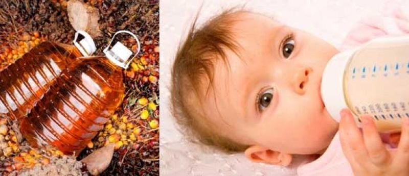 Пальмовое масло в детских смесях: мифы и реальность - статья педиатра