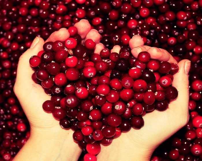 Клюква при беременности: можно ли ягоды, морс, компот, как заваривать от отёков, при простуде и цистите