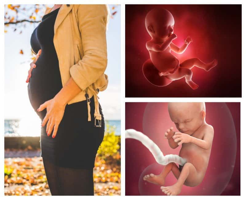 19 неделя беременности: признаки и ощущения женщины, симптомы, развитие плода