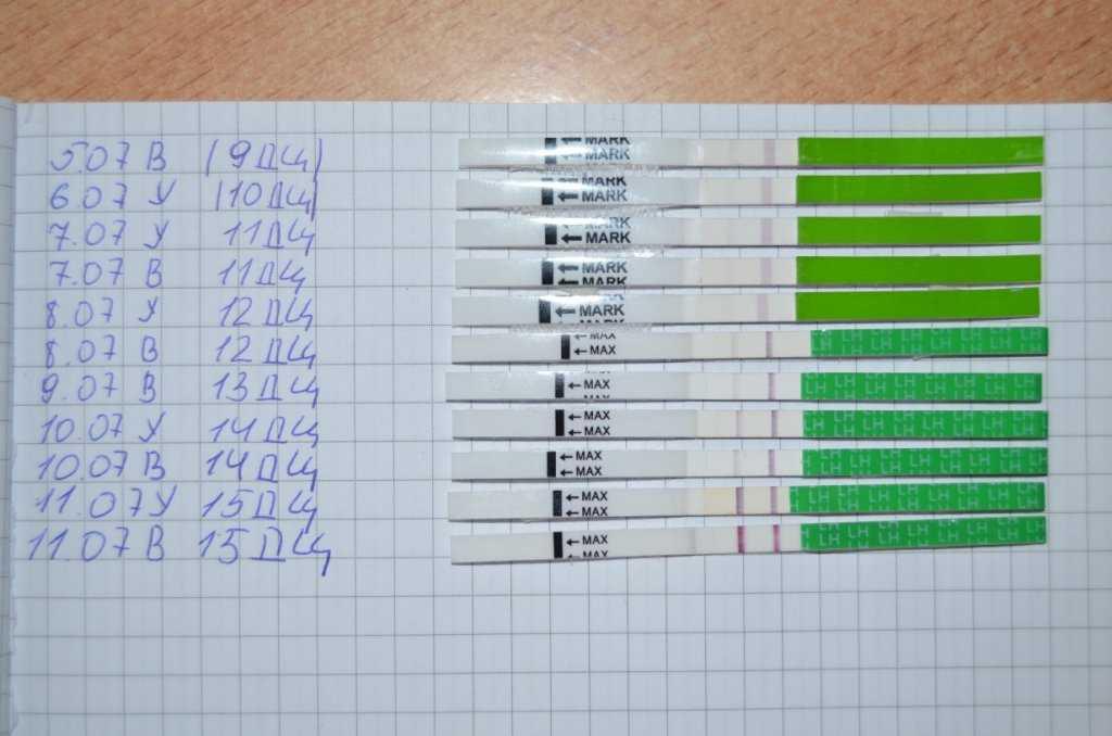 Тест на овуляцию - как правильно им пользоваться
