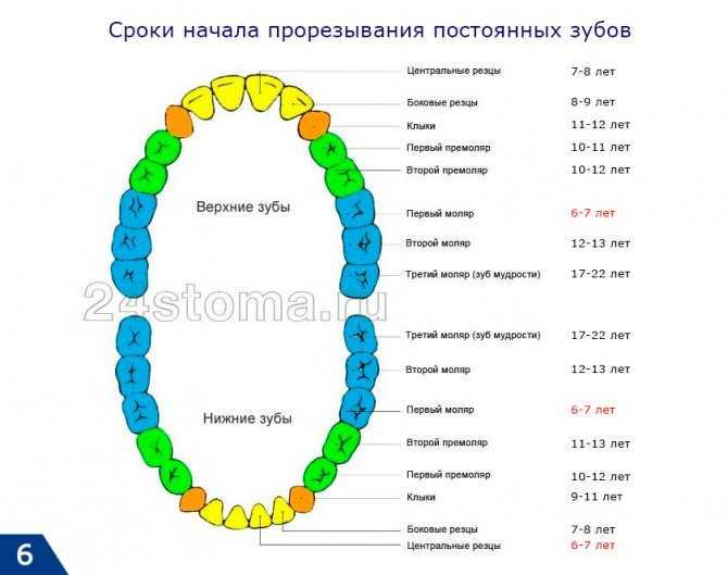 Порядок прорезывания молочных зубов у детей