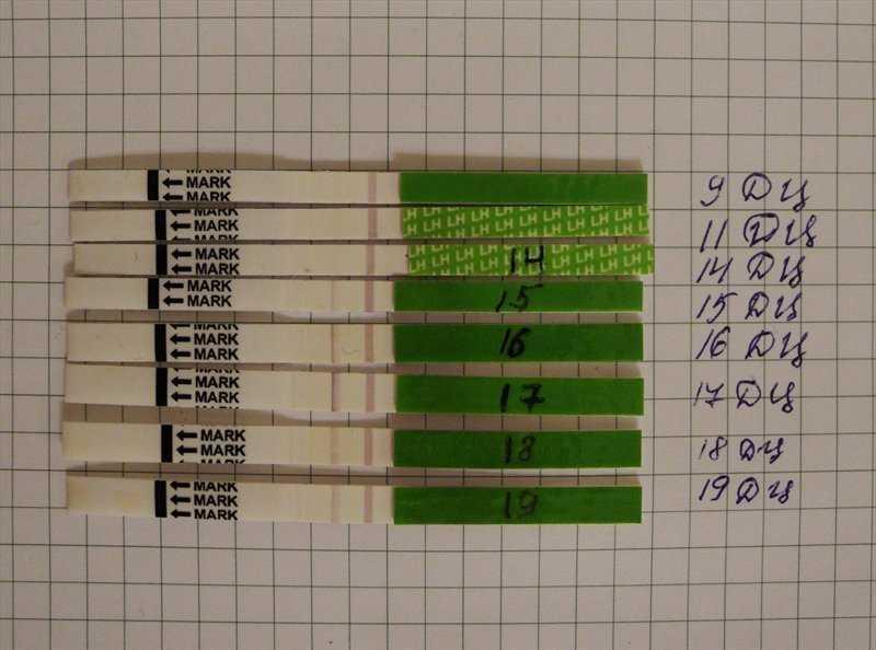Что покажет тест на овуляцию после овуляции