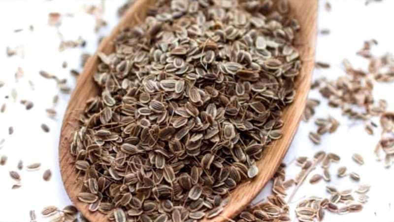 Семена укропа при беременности и грудном вскармливании