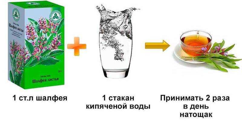 Как пить листья шалфея чтобы забеременеть. шалфей при планировании беременности: как принимать, действие, противопоказания - новая медицина