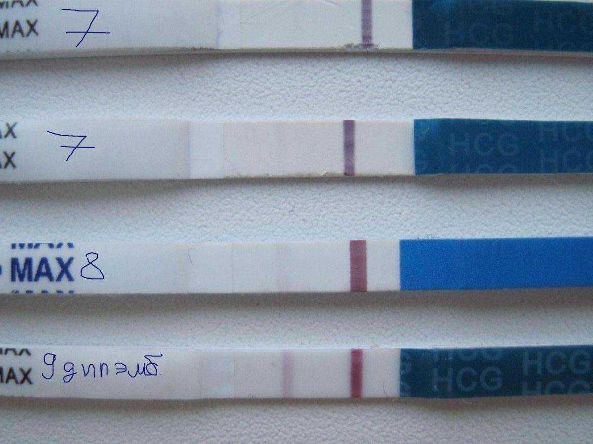 Тест на беременность после эко: когда, через сколько делать после подсадки, как выглядит отрицательный и положительный