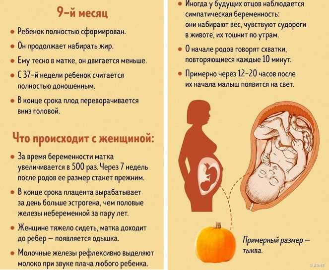 Сколько длится беременность у женщин в неделях, с момента зачатия