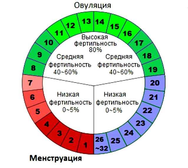 Способы, как рассчитать день овуляции
