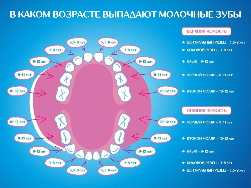 Сколько у детей молочных зубов должно быть в норме?