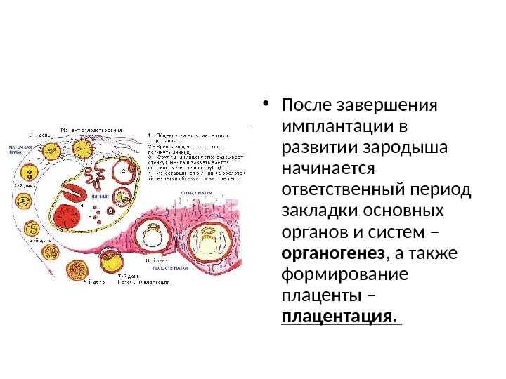 """Имплантация эмбриона   клиника """"центр эко"""" в москве"""