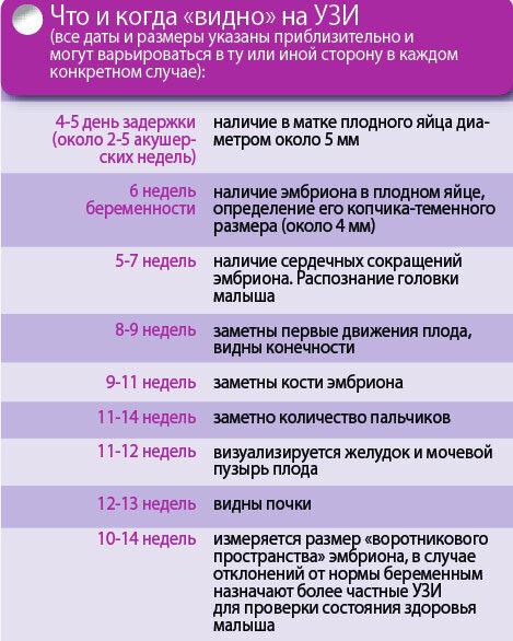 Расшифровка узи при беременности: как узнать нормы и показатели плода