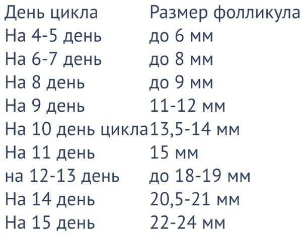 Размеры фолликулов по дням цикла