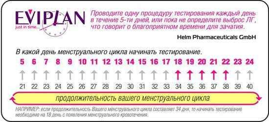 В какой день ждать овуляцию при регулярном цикле 28-30 дней