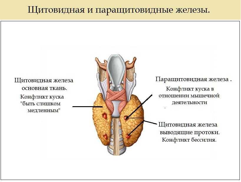 Психосоматика щитовидной железы: причины увеличения, узлы, аутоиммунный тиреоидит, киста, гипотиреоз