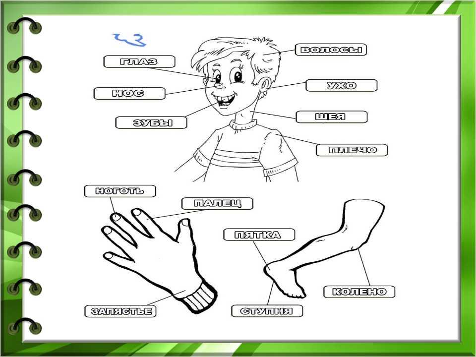 Дидактические игры на изучение частей тела