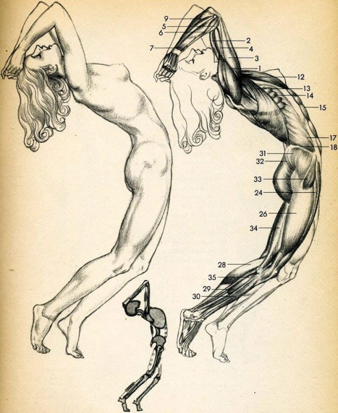 Психосоматика боли в колене: психосоматика правого и левого коленного сустава