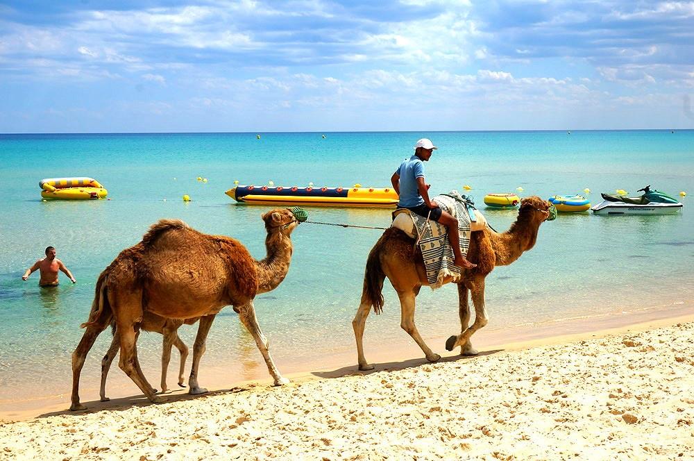Отдых в тунисе с детьми. особенности семейного отдыха. курорты и цены