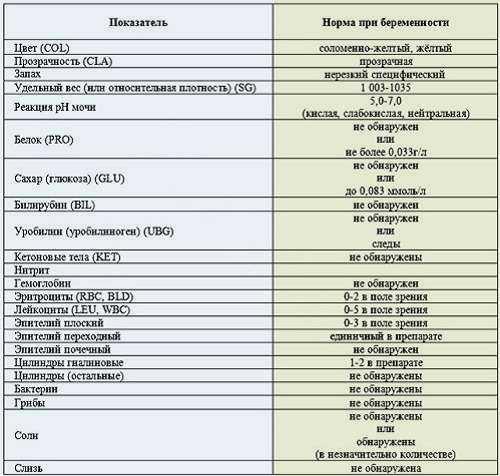 Эпителий в моче - нормы, расшифровка, лечение