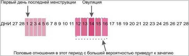 Можно ли забеременеть не в дни овуляции: до и после - ovulyacia.ru