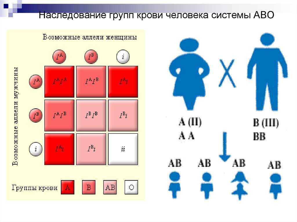 О наследовании группы крови. какая группа крови будет у ребенка?