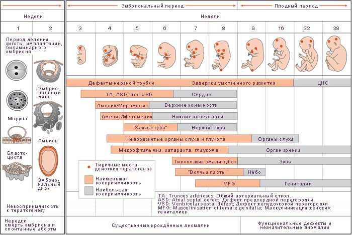 Как определить срок беременности: способы, онлайн калькулятор