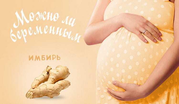 Можно ли имбирь при беременности и как его употреблять на разных сроках + фото, видео и отзывы